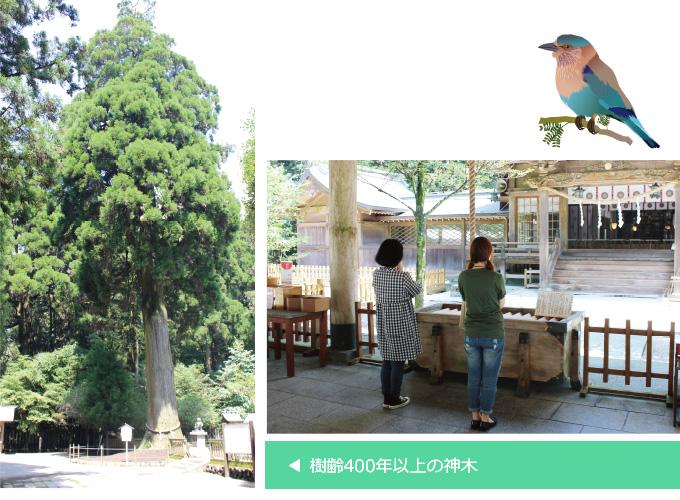 i狭野神社 写真2