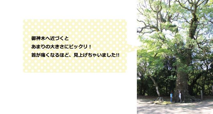 綾神社 写真2
