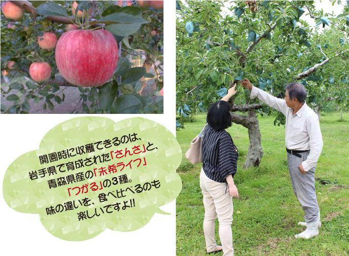 美味しい食べ物と自然がいっぱい! 小林市特集-北生駒高原りんご園