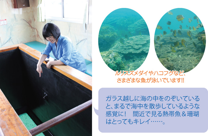 自然と動物に癒される 串間市特集!かめんこ号_02