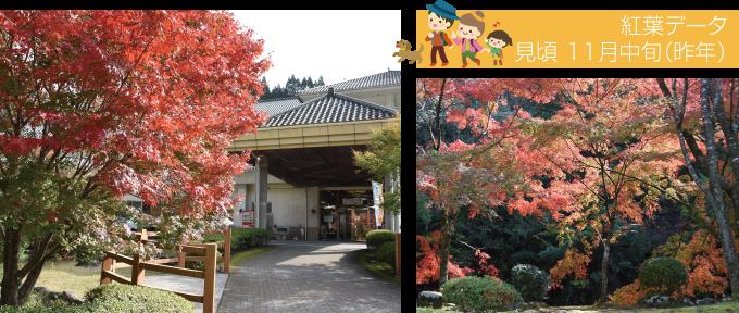 紅葉特集-青井岳自然公園