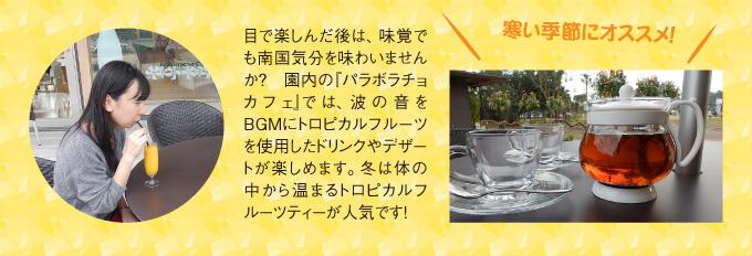 宮交ボタニックガーデン青島写真